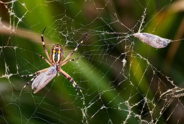 Foto macro de uma aranha envolvendo a presa