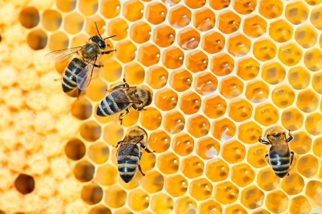 Foto macro de uma colmeia de abelhas em um favo de mel com copyspace. abelhas produzem mel fresco e saudável