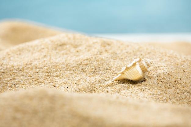 Foto macro de uma concha em uma praia arenosa