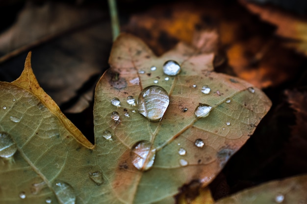 Foto macro de uma folha de outono com gotas de água
