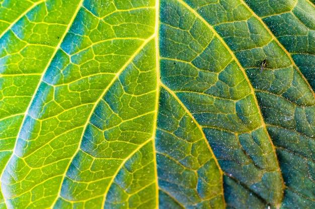 Foto macro de uma folha verde com as veias e a nervura central visíveis e um pequeno inseto nela