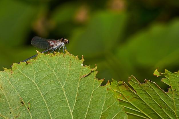 Foto macro de uma libélula em uma planta verde