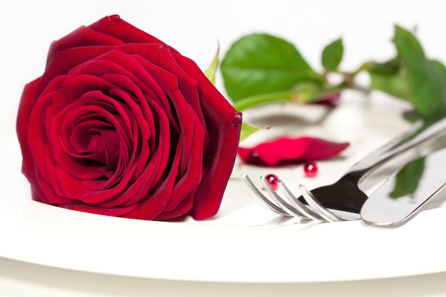 Foto macro de uma linda rosa vermelha colocada em um prato branco ao lado de uma faca e um garfo