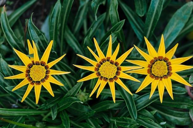 Foto macro de vista superior de lindas flores amarelas