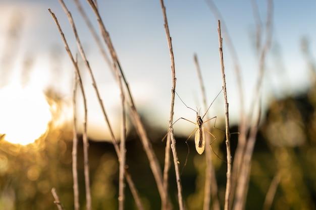 Foto macro incrível de um díptero na natureza