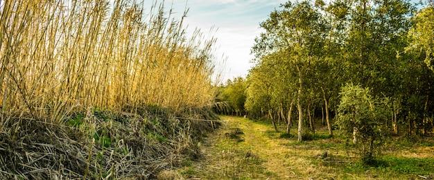 Foto panorâmica de um campo com árvores verdes e altos galhos de grama