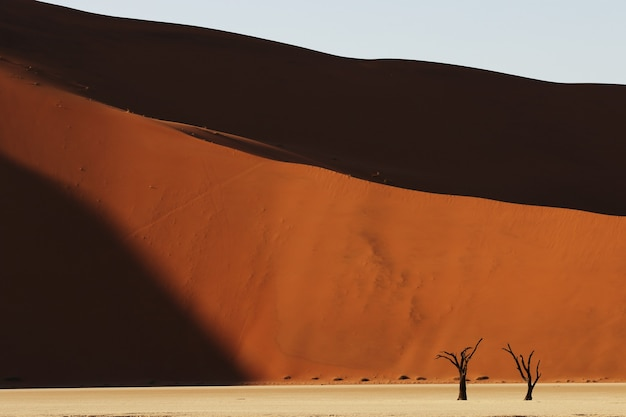 Foto panorâmica de uma encosta de duna de areia com árvores secas na base