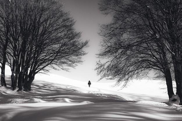 Foto preto e branco de uma pessoa em pé na neve e duas árvores nuas