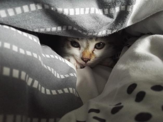 Foto próxima de um gato fofo deitado e olhando por entre os cobertores na cama