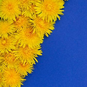 Foto quadrada. dentes-de-leão amarelos na diagonal. sobre um fundo azul lugar para texto