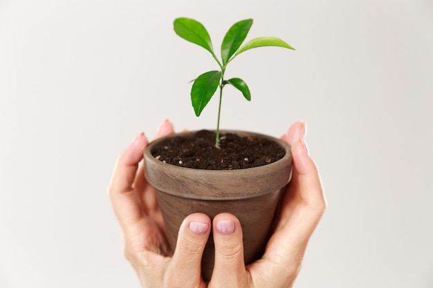Foto recortada das mãos da mulher segurando um pote marrom com planta jovem