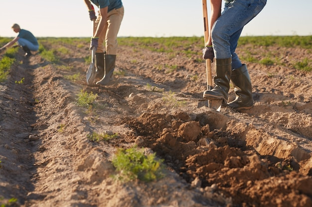 Foto recortada de trabalhadores irreconhecíveis cavando o solo com pás e plantando em uma plantação de vegetais ao ar livre iluminada pela luz solar, copie o espaço