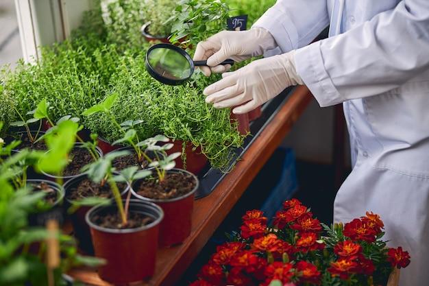 Foto recortada de uma bióloga examinando mudas de tomilho em vasos com uma lupa