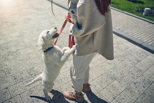 Foto recortada de uma jovem de cabelos compridos em roupa casual inclinando-se em direção ao seu animal de estimação ao ar livre