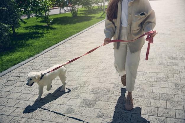 Foto recortada de uma jovem proprietária de cabelos escuros conduzindo seu lindo cachorro na coleira