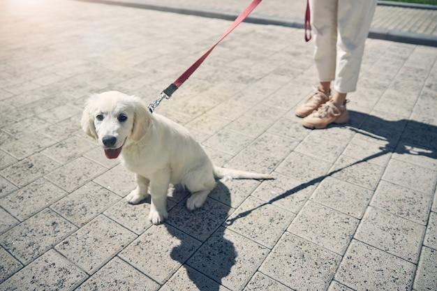 Foto recortada de uma senhora segurando seu cachorro na coleira na frente de si mesma
