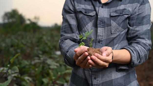Foto recortada do agricultor furando o broto jovem em pé no campo.