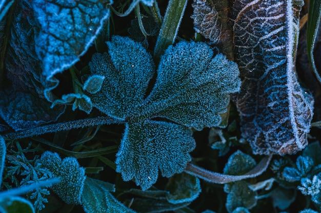 Foto seletiva de folhas congeladas no parque maksimir em zagreb, croácia, durante o dia