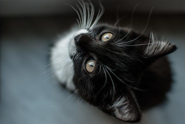 Foto seletiva de um gato adorável com pelo preto e bigodes brancos