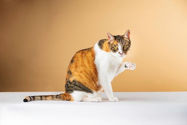Foto stock sentado gato acenando com pata