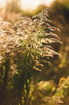 Foto tonificada de close-up de grama crescendo em campo de outono