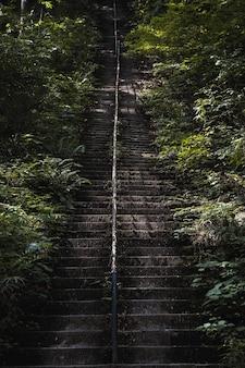 Foto vertical da escada velha coberta de musgo em um parque