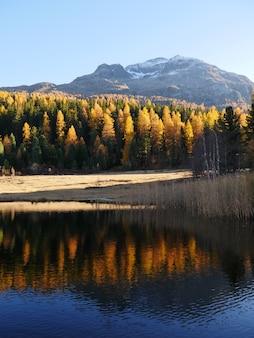 Foto vertical da floresta de outono e seu reflexo no lago