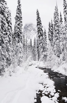 Foto vertical da floresta de pinheiros coberta de neve no inverno