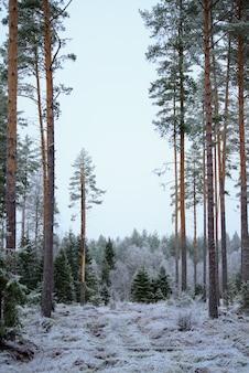 Foto vertical da maravilhosa floresta de abetos no inverno