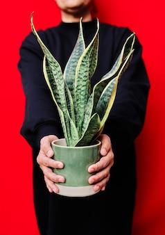 Foto vertical da mulher vestida de preto segura um vaso com plantas cobras na parede vermelha.