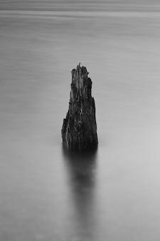Foto vertical da raiz de uma árvore no mar congelado coberto de névoa