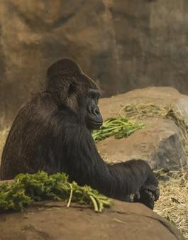 Foto vertical da vista lateral de um gorila sentado perto de rochas
