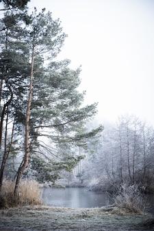 Foto vertical das árvores perto do lago em um dia de nevoeiro no inverno
