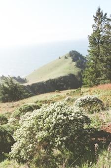 Foto vertical de arbustos e montanhas