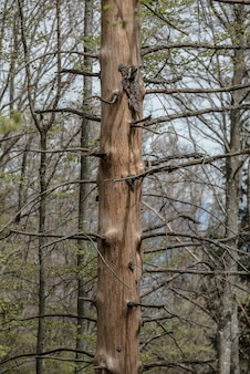 Foto vertical de árvores nuas em uma floresta à luz do dia