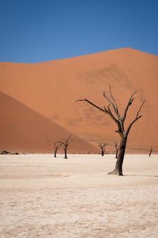 Foto vertical de árvores sem folhas em um deserto com altas dunas de areia
