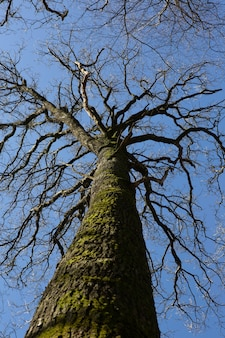 Foto vertical de baixo ângulo de um tronco de árvore coberto de musgo sob o céu azul claro