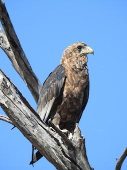 Foto vertical de baixo ângulo de uma águia sentada em um galho sob um céu azul