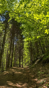 Foto vertical de baixo ângulo de uma trilha na floresta