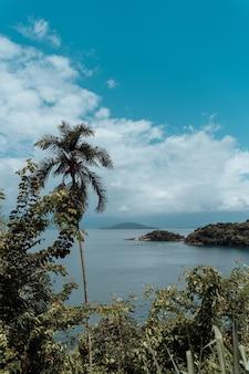 Foto vertical de belas palmeiras e vista da praia no rio de janeiro