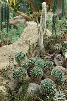 Foto vertical de cactos, cactos em ambiente natural