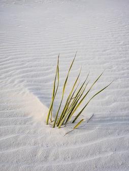 Foto vertical de ervas marinhas mal enterradas na areia branca ondulante
