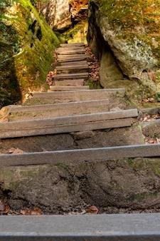 Foto vertical de escadas na floresta cercada por musgo nas rochas