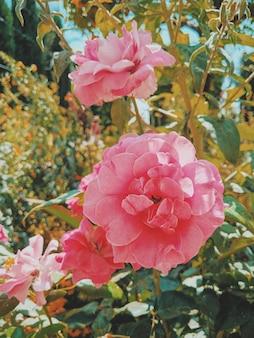 Foto vertical de flores rosa crescendo em galhos verdes