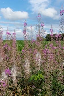 Foto vertical de flores rosa exóticas em frente a um belo prado coberto de grama