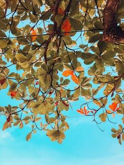 Foto vertical de folhas verdes e marrons de uma árvore no brasil com um céu azul ao fundo