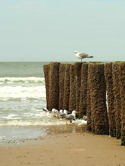 Foto vertical de gaivotas brancas em uma praia de areia dourada com um céu azul claro