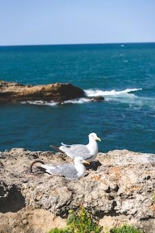 Foto vertical de gaivotas perto do mar