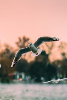 Foto vertical de gaivotas voando sobre o mar ao pôr do sol