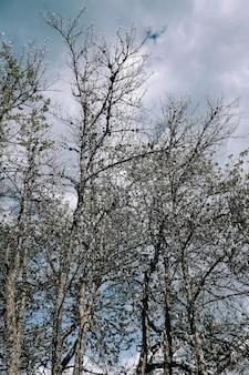 Foto vertical de galhos de árvores nuas no parque sob céu nublado
